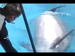 Dolphin Erection Training