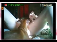 1620 Webcam Angel Dog Brush (part 2)