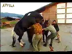 20e180 Horse Mating