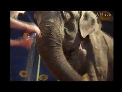 Milly Amorim  Elephant (part 14)