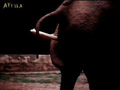 (mating Animals Pornographically)cd1 Kth