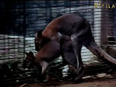 (mating Animals Pornographically)cd2 Kth