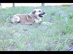 Picnic dog play (part 4)