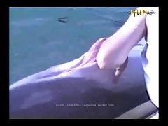 Dolphin Cock